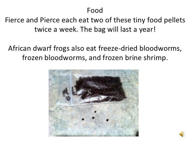 African Dwarf Frogs