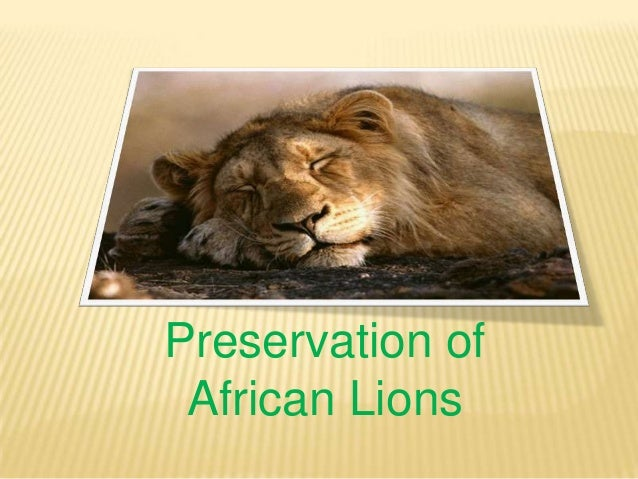 Preservation of African Lions