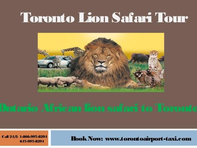 african lion safari