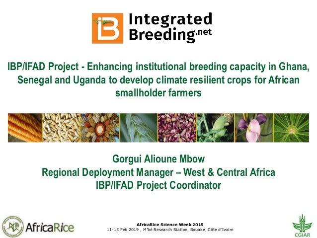 AfricaRice Science Week 2019 11-15 Feb 2019 , M'bé Research Station, Bouaké, Côte d'Ivoire IBP/IFAD Project - Enhancing in...