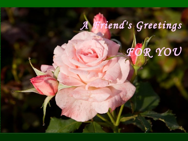 A Friend's Greetings   FOR YOU
