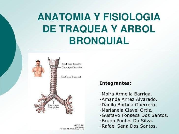 ANATOMIA Y FISIOLOGIA DE TRAQUEA Y ARBOL      BRONQUIAL          Integrantes:          -Moira Armella Barriga.          -A...