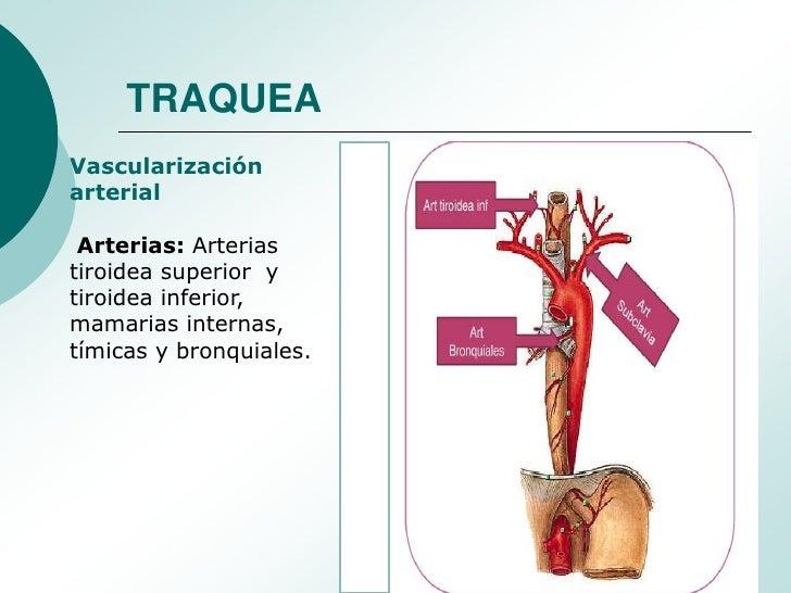 Moderno Anatomía De Los árboles Bandera - Anatomía de Las ...