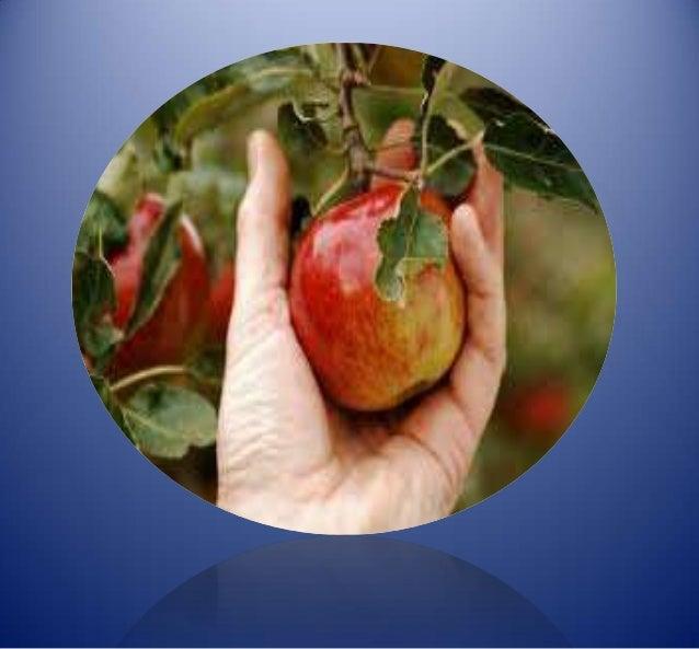 post harvest management of fruits Jenny ekman, adam goldwater and emma winley title: postharvest  management of vegetables: australian supply chain handbook isbn: 978-0- 9925251-5-6.