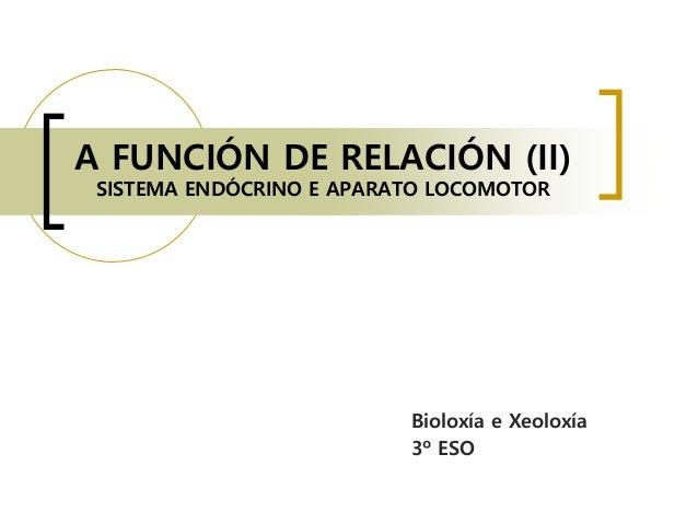 A FUNCIÓN DE RELACIÓN (II) SISTEMA ENDÓCRINO E APARATO LOCOMOTOR Bioloxía e Xeoloxía 3º ESO