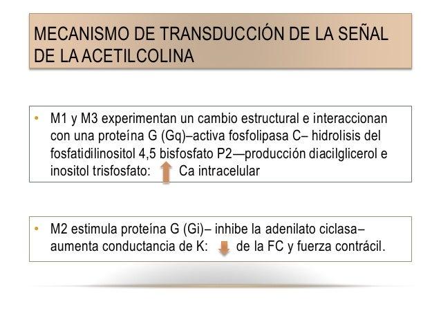 Agonistas colin rgicos farmacolog a harvey - Conversion ca en m2 ...