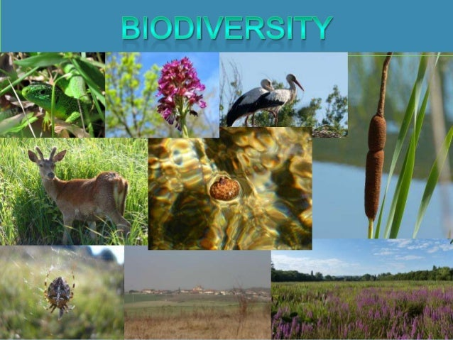 WHAT IS                                BIODIVERSITY?The variety of diverse living beings in a specific area.BIO means life...