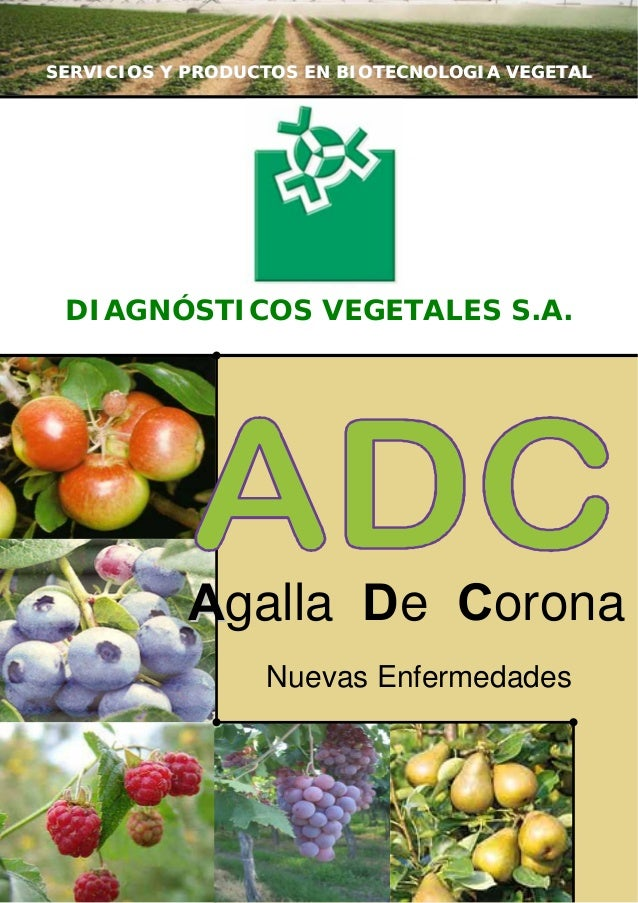 SERVICIOS Y PRODUCTOS EN BIOTECNOLOGIA VEGETAL  DIAGNÓSTICOS VEGETALES S.A.  Agalla De Corona Nuevas Enfermedades