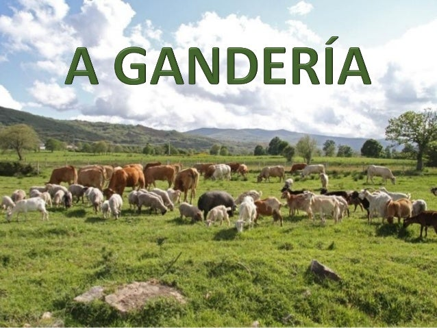A gandería é a cría de animais domesticables con fins utilitarios  para obter deles alimentos e outros produtos de interes...