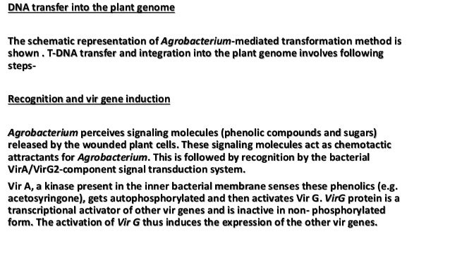 DNA transfer into the plant genome The schematic representation of Agrobacterium-mediated transformation method is shown ....