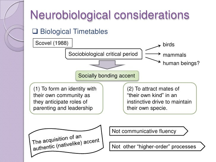 Neurobiological considerations Biological Timetables Scovel (1988)                                           birds       ...
