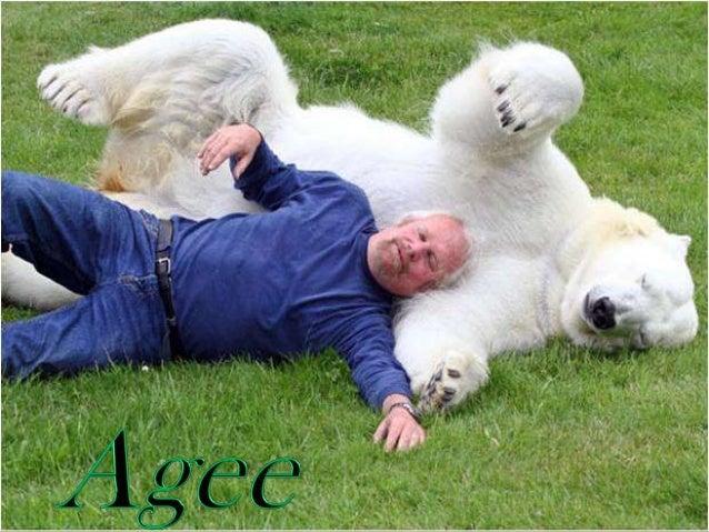 Animal trainer Mark Dumas plays with a polar bear named Agee
