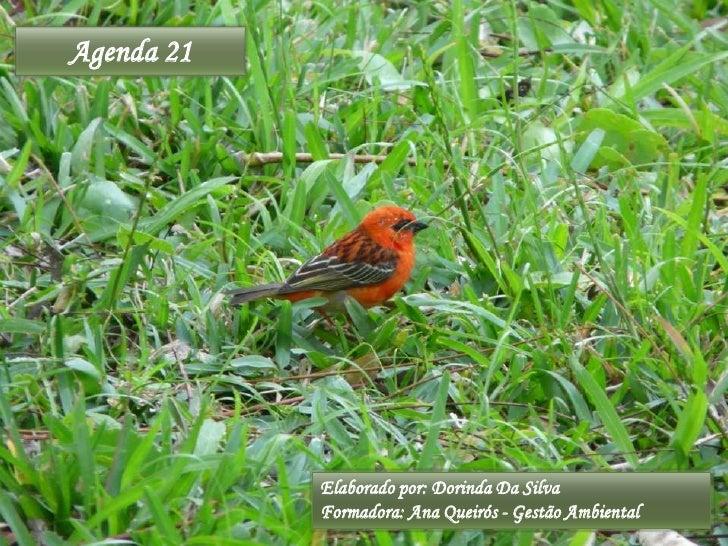 Agenda 21<br />Elaborado por: Dorinda Da Silva<br />Formadora: Ana Queirós - Gestão Ambiental<br />