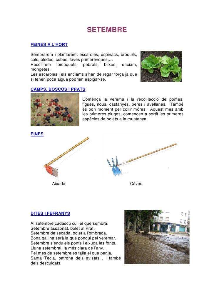 SETEMBRE FEINES A L'HORT  Sembrarem i plantarem: escaroles, espinacs, bròquils, cols, bledes, cebes, faves primerenques,… ...