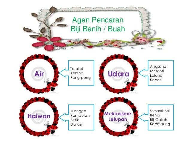 Agen Pencaran Biji Benih / Buah Air Udara Haiwan Mekanisme Letupan Teratai Kelapa Pong-pong Angsana Meranti Lalang Kapas M...