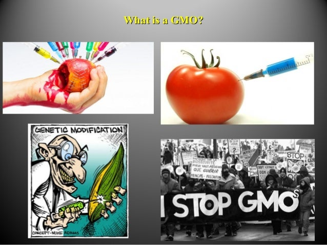 What is a GMO?What is a GMO?