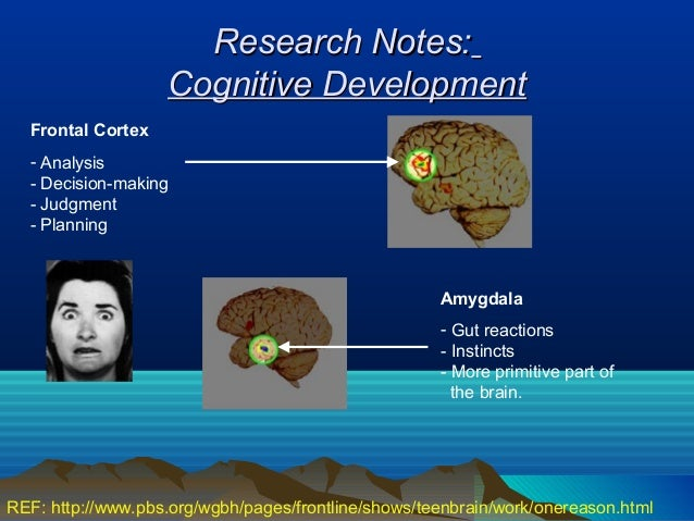 Research Notes:                   Cognitive Development  Frontal Cortex  - Analysis  - Decision-making  - Judgment  - Plan...