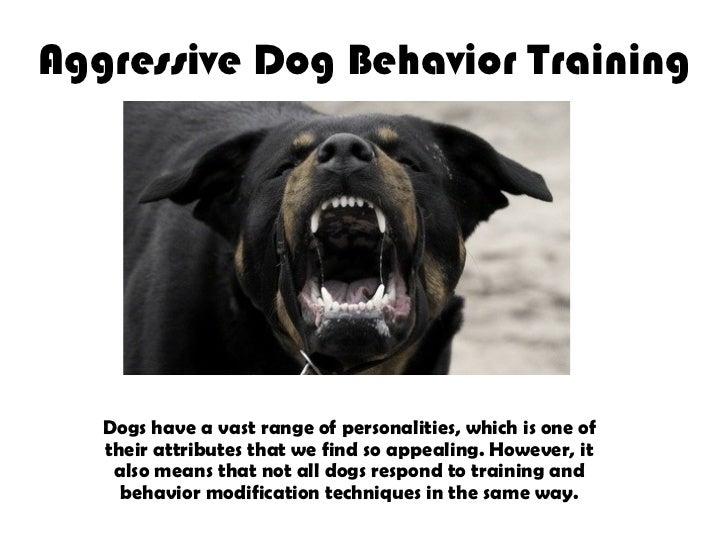 Aggressive Dog Behavior Training