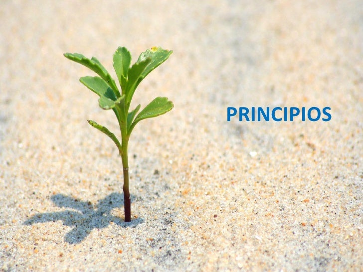PRINCIPIOS             8