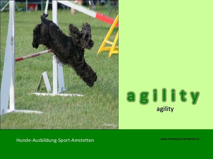 agility                                     agility                                      www.hundesport-amstetten.atHunde-...
