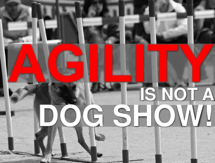 1<br />DOG SHOW!<br />AGILITY<br />IS NOT A<br />