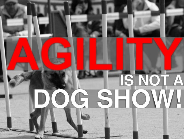 1  IS NOT A  DOG SHOW!