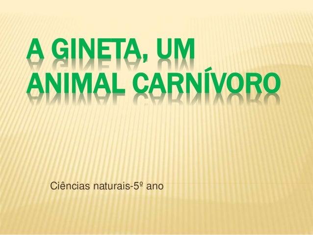 A GINETA, UM  ANIMAL CARNÍVORO  Ciências naturais-5º ano