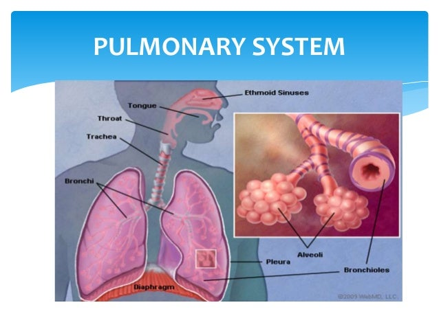 EFFECT OF AGING ON CARDIO-PULMONARY SYSTEM