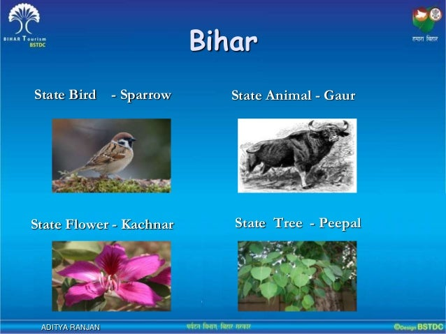 history of bihar The history of bihar is one of the most varied in india bihar consists of three distinct regions, each has its own distinct history and culture.