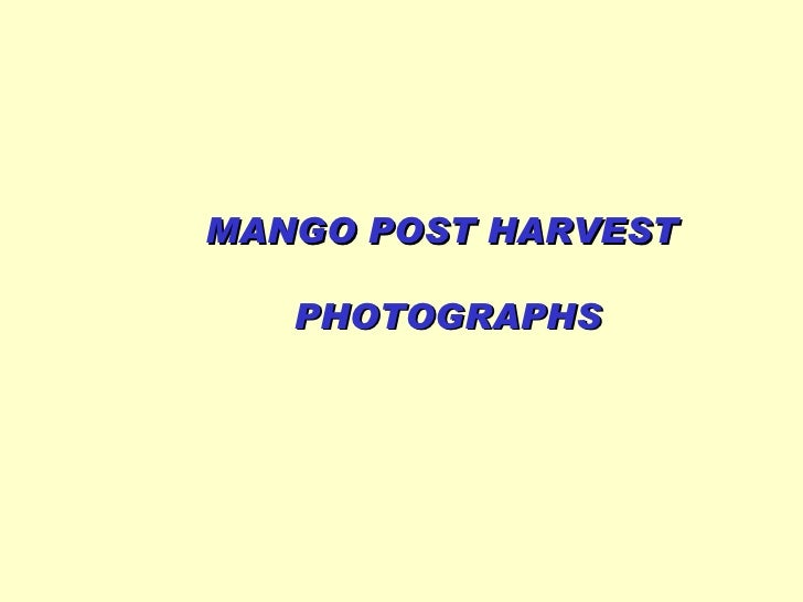 MANGO POST HARVEST  PHOTOGRAPHS