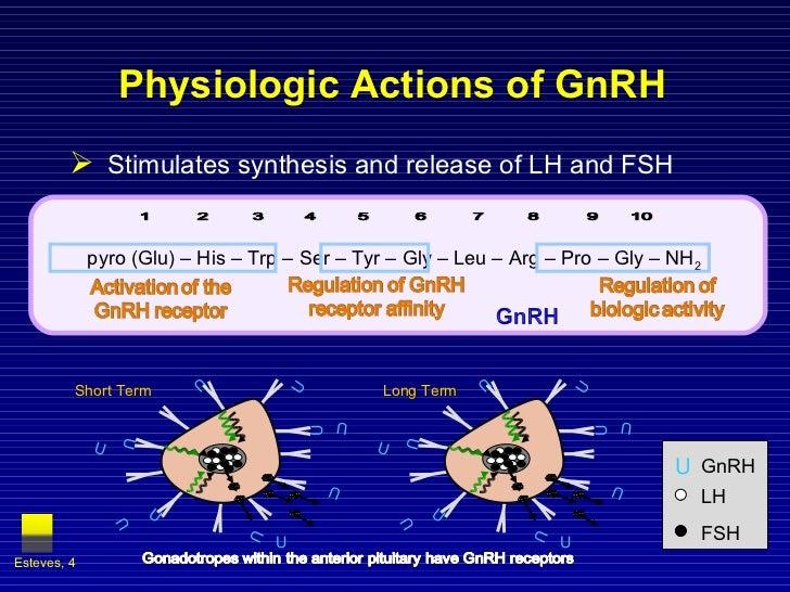 Physiologic Actions of GnRH <ul><li>Stimulates synthesis and release of LH and FSH </li></ul>Esteves,  U GnRH LH FSH Short...