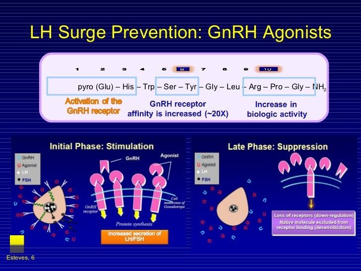 LH Surge Prevention: GnRH Agonists  Esteves,  pyro (Glu) – His – Trp – Ser – Tyr – Gly – Leu – Arg – Pro – Gly – NH 2