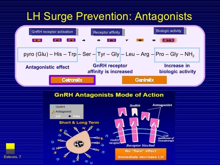 LH Surge Prevention: Antagonists  Esteves,  pyro (Glu) – His – Trp – Ser – Tyr – Gly – Leu – Arg – Pro – Gly – NH 2 GnRH r...