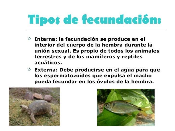 Tipos de fecundación:   <ul><li>Interna: la fecundación se produce en el interior del cuerpo de la hembra durante la unión...
