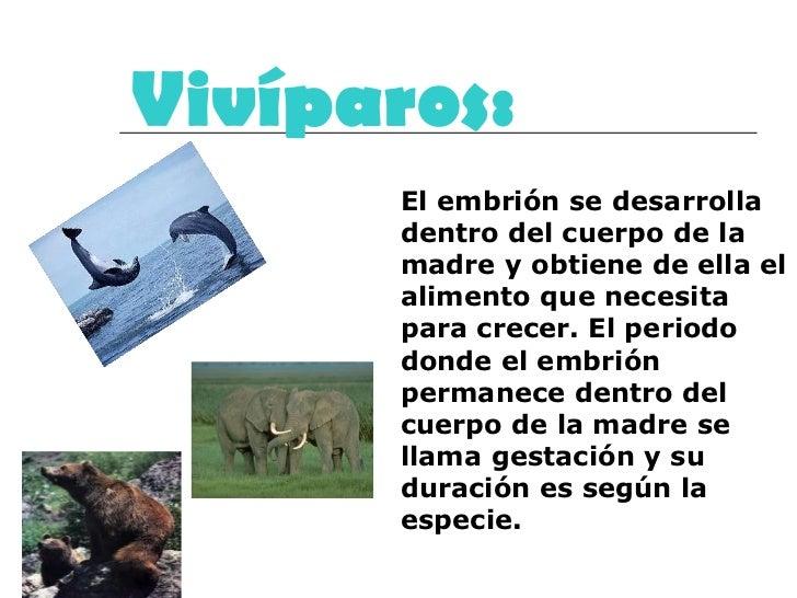 Vivíparos: El embrión se desarrolla dentro del cuerpo de la madre y obtiene de ella el alimento que necesita para crecer. ...