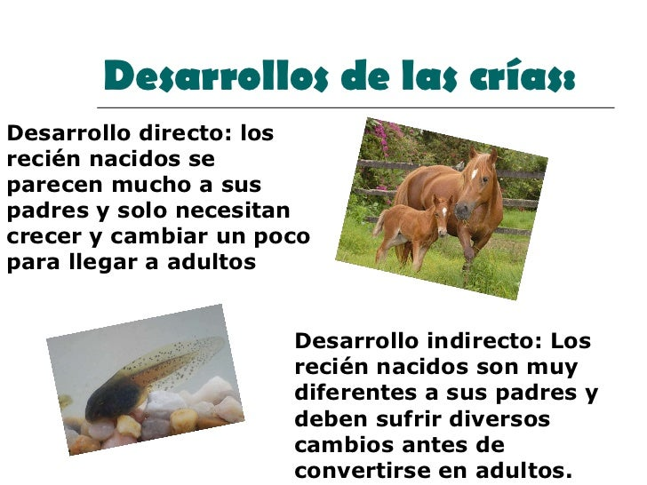 Desarrollos de las crías: Desarrollo directo: los recién nacidos se parecen mucho a sus padres y solo necesitan crecer y c...