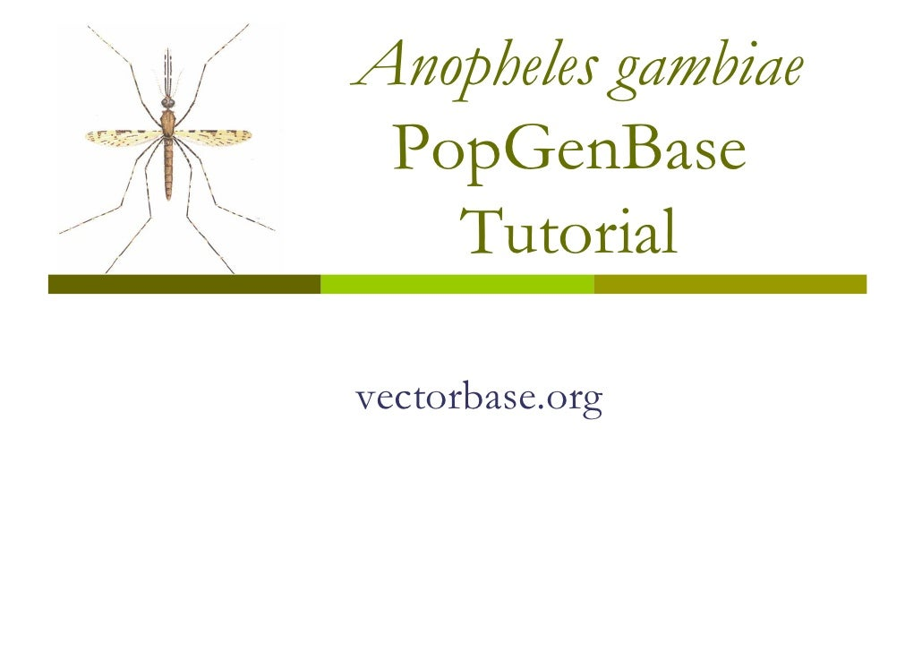 Anopheles gambiae  PopGenBase    Tutorial  vectorbase.org