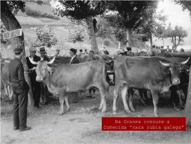 """Os logros da Granxa O combate de andazos. A Estación de Fitopatoloxía Agraria  Andazos como o """"oído"""", o mildew, ou a tint..."""
