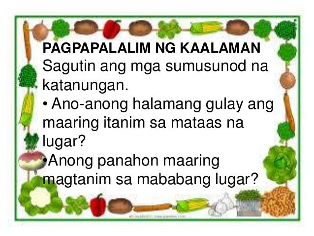 ang pagtatanim Pagtatanim ng melon, pakwan at pipino translate with translator this translation tool is powered by google fao is not responsible for the accuracy of.