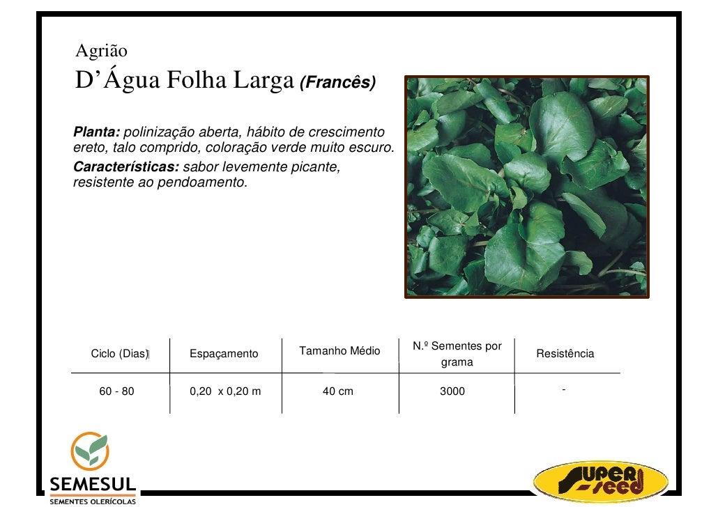 Agrião D'Água Folha Larga (Francês) Planta: polinização aberta, hábito de crescimento ereto, talo comprido, coloração verd...