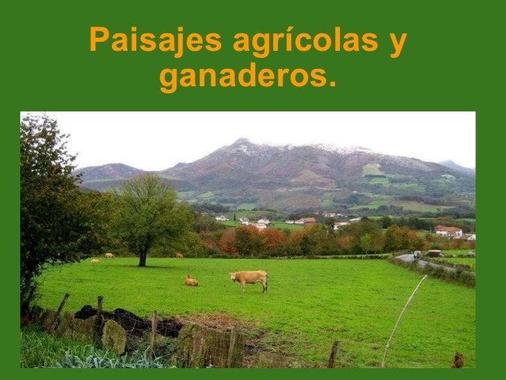 Paisajes agrícolas y ganaderos.