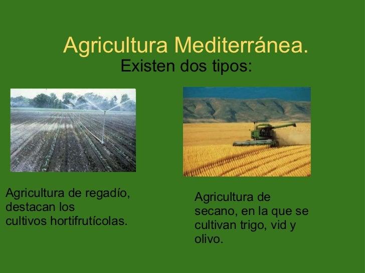 Agricultura for Que son cultivos asociados