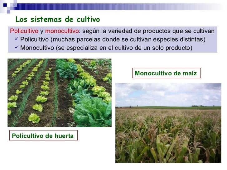 <ul><li>Policultivo  y  monocultivo : según la variedad de productos que se cultivan   </li></ul><ul><ul><li>Policultivo (...