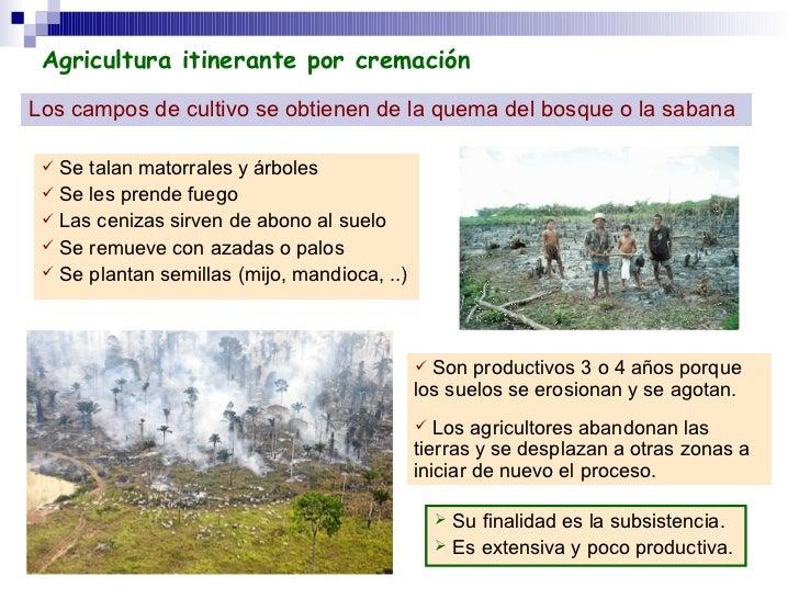 Agricultura itinerante por cremación Los campos de cultivo se obtienen de la quema del bosque o la sabana <ul><li>Se talan...