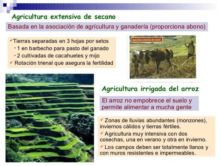 Agricultura extensiva de secano Basada en la asociación de agrícultura y ganadería (proporciona abono) <ul><li>Tierras sep...
