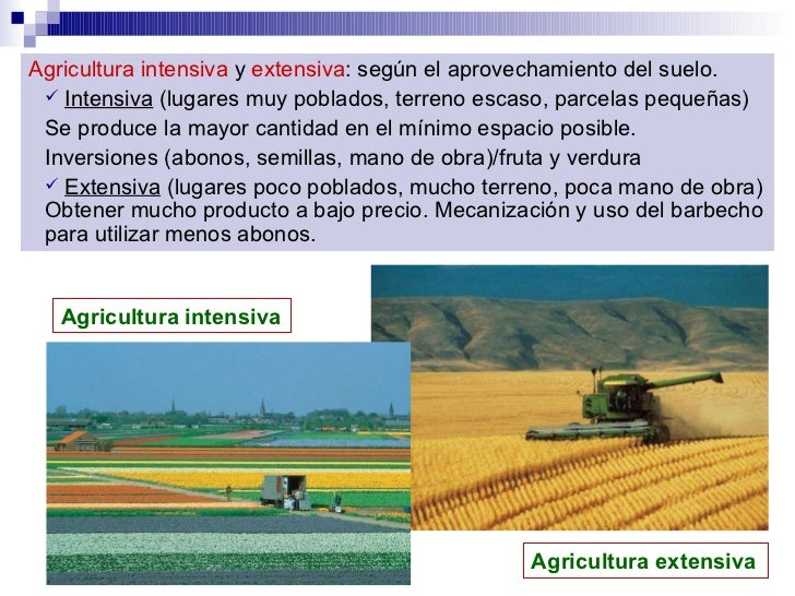 <ul><li>Agricultura intensiva  y  extensiva : según el aprovechamiento del suelo.   </li></ul><ul><ul><li>Intensiva  (luga...