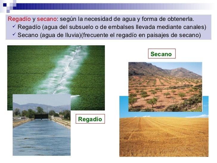 <ul><li>Regadío  y  secano : según la necesidad de agua y forma de obtenerla.   </li></ul><ul><ul><li>Regadío (agua del su...