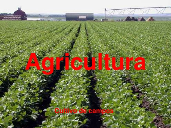 Agricultura  Cultivo de campos