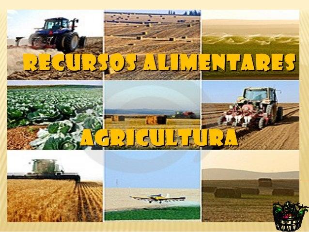 RECURSOS ALIMENTARES    AGRICULTURA