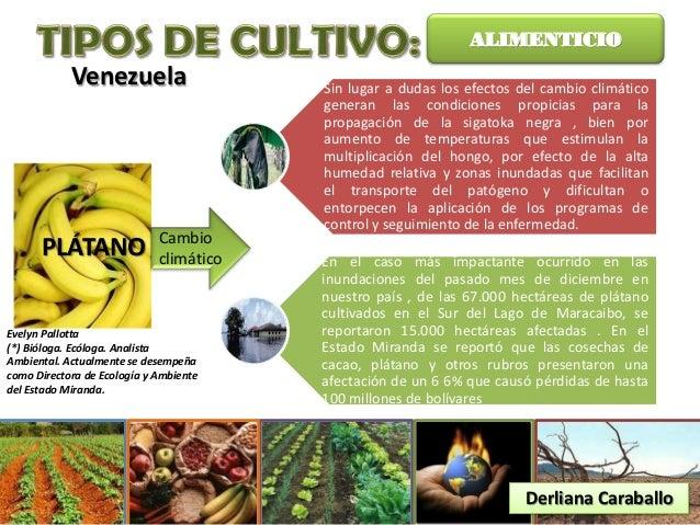 Resultado de imagen para vegetación y agricultura en vzla
